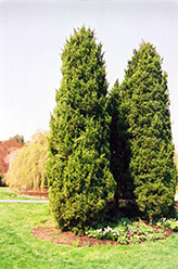 Eastern Redcedar (Juniperus virginiana) at Valley View Farms